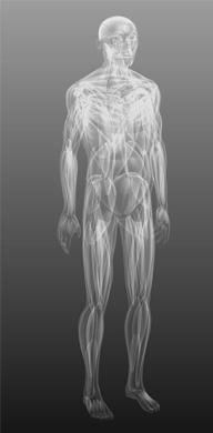 Pojivové tkáně